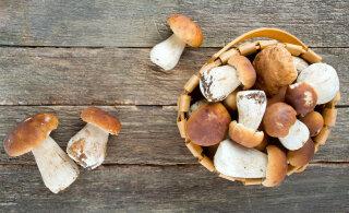 KASULIK TEADA | Millal seeni mitte süüa?