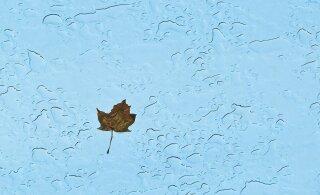 Дождь, снег, туман или все вместе? Читайте, какая погода нас ждет в ближайшие дни