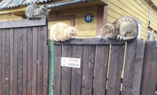 ЗАБАВНОЕ ФОТО: Четверо котов решили заменить собаку и встали на охрану дома