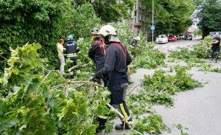 ФОТО | Сааремаа во время шторма: спасатели распиливают поваленные деревья, местные жители танцуют и поют