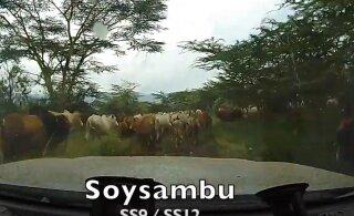 VIDEO | Kitsad teed ja lehmakarjad: just sellised näevad välja Keenia MM-ralli katsed