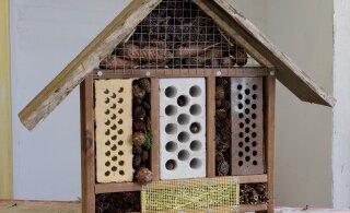 ÜKSIKASJALIK ÕPETUS JA VIDEO | Teeme ise moodsa putukahotelli