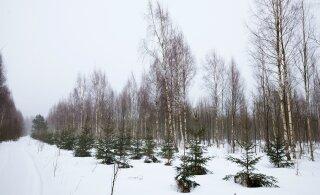 DEBATT | Kas metsa kaitseks on seadustes üha vähem sätteid?