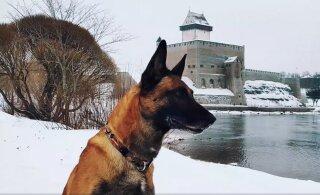 ВИДЕО | Смотрите, как кинолог Эрика и служебная собака Кейко патрулируют восточную границу!