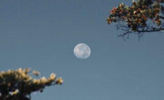 Почему Луна не падает на Солнце, хотя должна бы? Специалист знает ответ