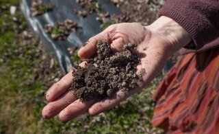 KUULA | Inimese tervis sõltub muu hulgas ka mullast. Kuidas küll?