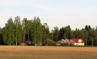Leili metsalood | Põllu ääres, metsa veerel