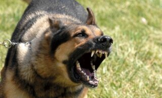 В Америке 18 собак съели своего хозяина без остатка