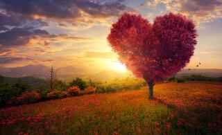 Alkeemia lugemisnurk   Tagasi armastuse juurde