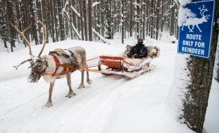 OTSEBLOGI JA AJAKAVA | Esmakordselt MM-kalendris olev Arktika ralli algab 5,6-kilomeetrise testikatsega