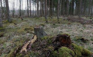 DEBATT | Kes peaks saama kaitsealuse metsa eest kompensatsiooni?
