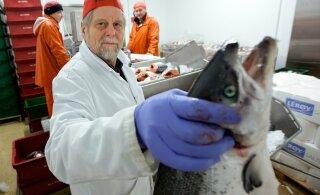 Kalatootja süüdistab listeeriabakteri levikus edasimüüjate valesid hoiustamistingimusi
