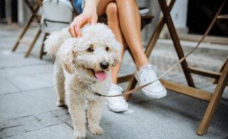 Koerte koolitaja selgitab: kuidas peaksid oma lemmikuga kohvikus käituma, et see oleks viisakas ja ka loomale meeldiv kogemus