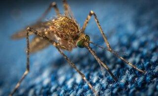 Жительница Норвегии наловила ведро комаров
