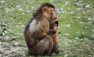 Jahipidamine ohustab troopilisi loomi rohkem kui kliimamuutused