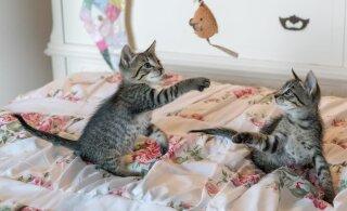 Kui kassid kipuvad pahandust tegema, siis sisusta rohkem nende aega