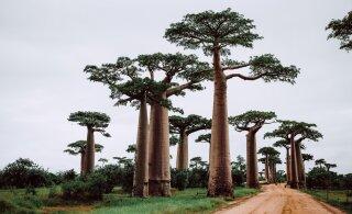 Ученые прогнозируют, что остров Мадагаскар распадется на части и станет архипелагом