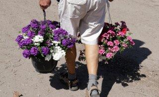 FOTOD | Sel nädalavahetusel peetavalt Türi lillelaadalt leiab mõistlikud hinnad ja rikkaliku kaubavaliku