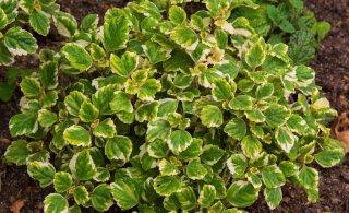 Need neli rohelist taime sobivad ideaalselt amplisse