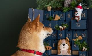 Pane oma teadmised proovile ja saa targemaks meie vahva jõulumänguga!