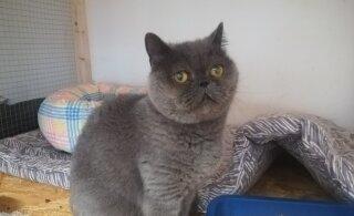 Курьезный случай: кошка случайно уехала из Ласнамяэ на Сааремаа и теперь ищет хозяев