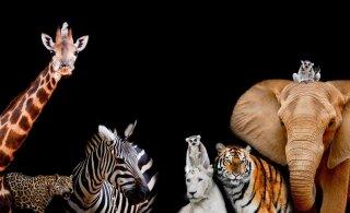 ÜRO raport ennustab hävingut - isegi koduloomi ähvardab väljasuremine