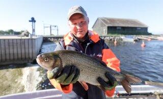 Лучшие рыбаки Эстонии поделятся навыками на Певческом поле. Но петь не будут!