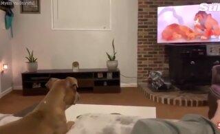 VIDEO | Tõeline empaatia! Lõvikuninga multifilmi traagiline stseen ajab koera nutma