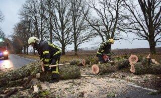 Гололед и поваленные деревья. Ситуация на дорогах сегодня может быть очень опасной