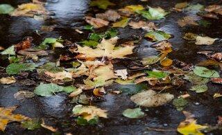 Прогноз погоды на начало недели: плюсовая температура и дожди