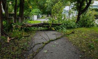 Страховая компания: в преддверии осенних штормов следует проверить, в каком состоянии находятся большие деревья