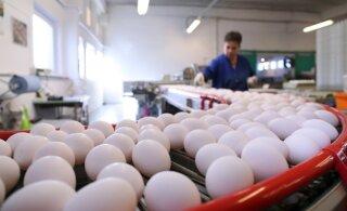 Salmonellabakteri rüüsteretke tõttu jõuab päevas poodi 5000 karpi mune vähem