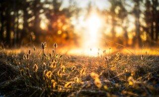 Uuel nädalal võib tulla kuni kümme kraadi sooja