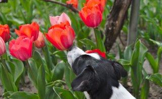 8 kevadist ohutusnõuannet: ole hoolas, et toredad jalutuskäigud ootamatult õudusunenäoks ei muutuks