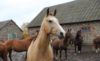 Tallinnas ringi kapanud ja last ehmatanud hobuste omanik selgub homme