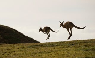 Austraalia ralli koht järgmise aasta WRC kalendris on üha suuremas ohus