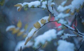 Метеослужба предупреждает о сильном снегопаде, штормовом ветре и гололеде