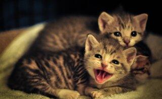 Забота о братьях наших меньших: 7 возможностей начать рождественский месяц с любовью к животным
