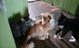 ФОТО | В рижской квартире нашли 20 измученных голодом котов, животным нужна помощь