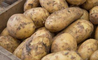 Lihtsamaks minna ei saa! Kui kartulite koorimine on sinu jaoks tüütu, siis niimoodi tehes ei peagi enam vaeva nägema