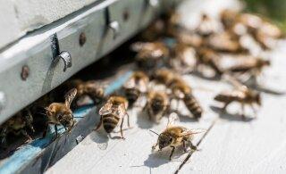 Eesti mesindusprogramm sai Euroopa Komisjoni heakskiidu