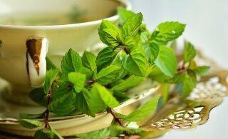 Millist taimeteed on hea juua siis, kui peal on masendus?