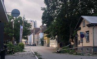 ФОТО | В центре Таллинна большое дерево упало на провода