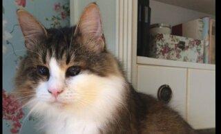 Помогите! В Хаабернеэме пропала слепая кошка