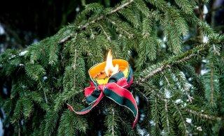 Первый день зимы и Первый Адвент — уже в эти выходные! Ждать ли подарков от погоды?