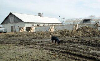 Põllumajandustootmises tekkiv ammoniaagiheide on inimesele surmav