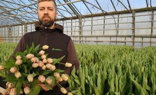 Садоводческие хозяйства: в этом году 8 марта мы ждем с большим трепетом