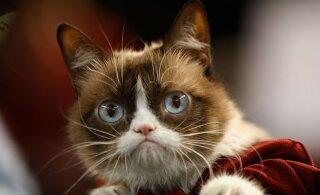 Скончалась всемирно известная в интернете хмурая кошка Грампи Кэт