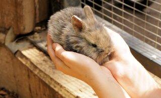 Pisi- ja eksootilised loomad ei sobi esimeseks lemmikuks lapsele
