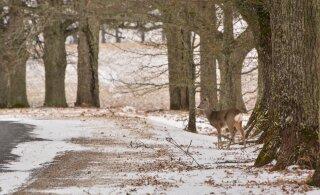 Mari Kartau: mets loomi täis, üks nunnum kui teine